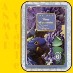 Čajová sviečka 6ks Modrý Hyacint
