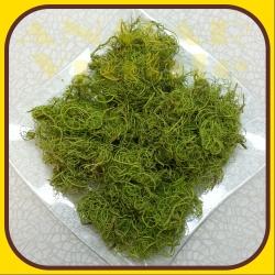 Curly moss 100g Zelená